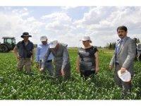 Tarım ve Orman Müdürü Sever, 'Süne-Sürvey' çalışmalarını inceledi