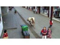 Çin'de hızla koşan at yayaları ezdi