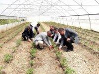"""Başkan Tanış: """"Sebze ve meyve fiyatları, yerli üretimle düşecek"""""""