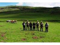 Kaybolan hayvanları jandarma drone ile buldu