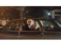 Kayseri trafiğinde dikkat çeken görüntü