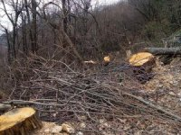 Uludağ'da ağaç katliamı