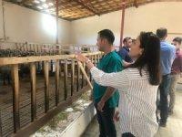 Veteriner hekimlerden koyun çiftliğine ziyaret