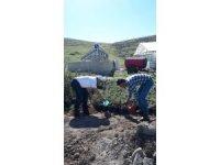 Peyjaz alanındaki bitkilere Solucan gübresi ile Sölom sıvısı verildi
