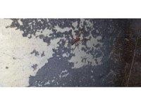 Kozluk'ta 'Sarıkız' örümcek alarmı