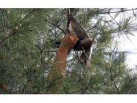 İtfaiye ekipleri güvercin için seferber oldu