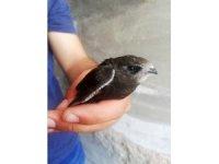 Parkta otururken Ebabil kuşu buldu