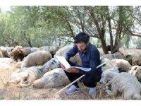 Üniversite sınavından çıktı, soluğu koyunların yanında aldı