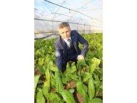 Ülke nüfusu artarken sebze üretim alanları azaldı