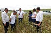 Altıntaş'ta tarım alanlarında kapsamlı incelme