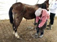 Zeyna, 9 ay sonra yaşama 4 nala sarıldı