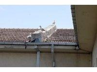 Yurt çatısına sıkışan yavru martıyı İBB itfaiyesi kurtardı