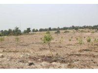 Ormanlık alanın bahçe haline getirilmesine tepki