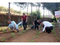 Yerli üretim için ata tohumları fide oldu, toprakla buluştu