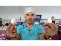 Yumurta üreticilerinin gözü Irak pazarında