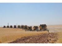 Dev işletmede devasa hasat maratonu