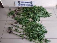 Evin bahçesinde ekili Hint kenevirleri polisin dikkatinden kaçmadı