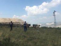 Kayıp inekler drone ile bulundu