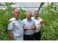 Aksaray'da sera ürünlerinin hasadı başladı