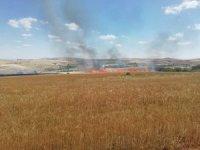 Aksaray'da 300 dönüm tarım hububat arazisi yandı