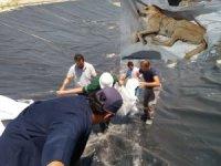 Baraj inşaatında mahsur kalan köpek kurtarıldı