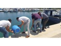 Didim'de deniz patlıcanı avcılarına geçit yok