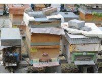 Aşırı sıcaklar arıları olumsuz etkiledi