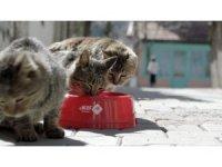 Sokak hayvanlarına su kabı