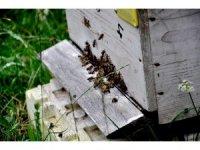 """Başkan Elevli; """"Zamansız külleme ile mücadele arıların ölümüne neden oluyor"""""""