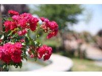 Çiçek gibi belediyecilik