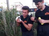 Kuyuya düşen 3 yavru kediyi itfaiye kurtardı