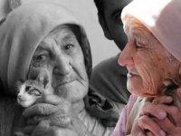 Otomobilin çarptığı kedisinin ardından gözyaşı döken yaşlı kadın herkesi ağlattı!