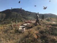 Karaman'da doğaya 2 bin kınalı keklik salındı