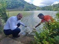Trabzon'daki göletlere 53 bin adet pullu sazan yavrusu bırakıldı