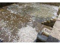150 bin balık telef oldu, 300 bin TL'lik zarar oluştu