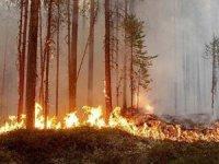 Muğla'da art arda çıkan orman yangılarında sabotaj şüphesi!