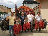 Patlıcan vadisinde ihracat hazırlıkları tamam
