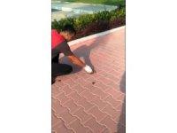 Ayağı yere atılan sakıza yapışan kuşu kurtardı