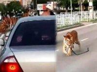 Trafikte kaplan korkusu! Araçtan yola atladı