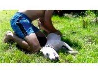 Boğulan köpeğini kurtaramadı