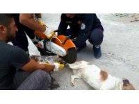 Ayağı zincire dolanan köpeği itfaiye kurtardı