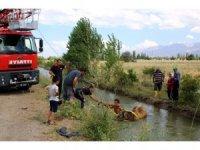 Sulama kanalına düşen büyükbaş hayvanı itfaiye ekipleri kurtardı