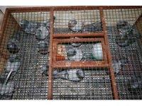 750 bin lira değerinde güvercinler bin kilometre mesafeden yarışacak