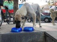 Erzincan Ülkü Ocakları sokak hayvanlarını unutmadı