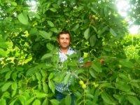 Ziraat Odası Başkanı Çalışkan: Çiftçilerimiz ceviz yetiştiriciliğine yönelmeli
