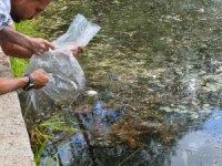 Ankara Büyükşehir Belediyesi, göl ve göletlerde balıklandırma çalışmalarını tamamladı