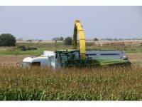 Antalya'da sılajlık mısırın tonu 200 TL