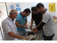 Elektrik çarpması sonucu yaralanan leylek sağlığına kavuştu