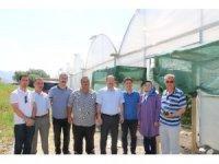 Erzincan'da sera yatırımları artıyor