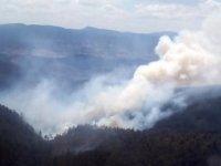 Bursa'da 7 ayrı noktada orman yangını... AFAD destek istedi